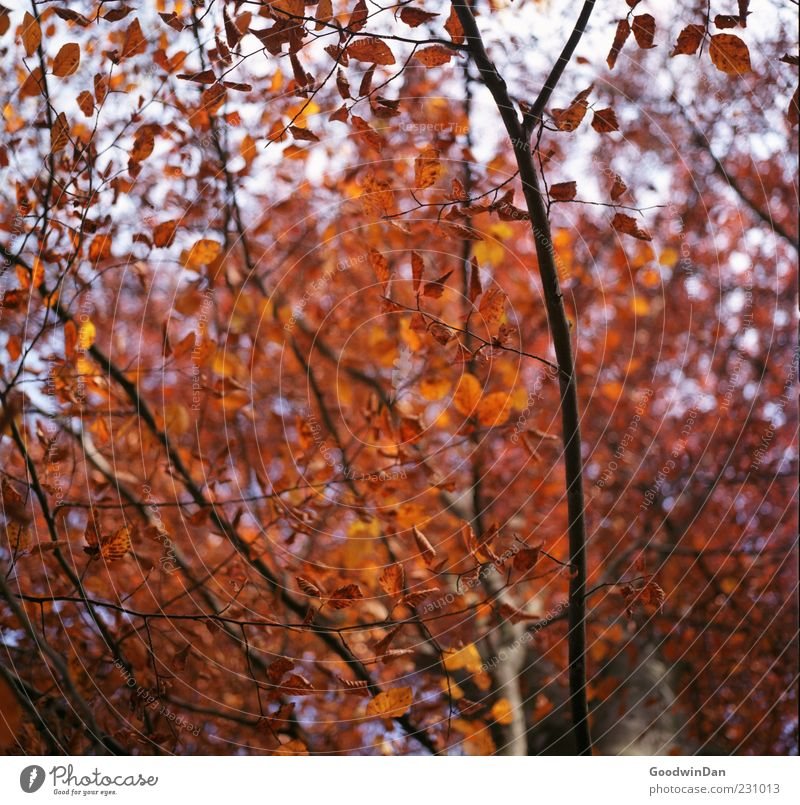 Nature Tree Plant Leaf Autumn Environment Moody Large Free Change Many Dry Copy Space Autumnal Branchage Autumnal colours