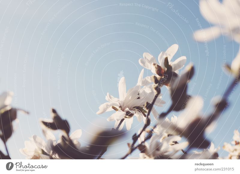 A hint of spring Environment Nature Plant Sky Cloudless sky Sun Sunlight Spring Summer Beautiful weather Flower Leaf Blossom Wild plant Exotic Esthetic