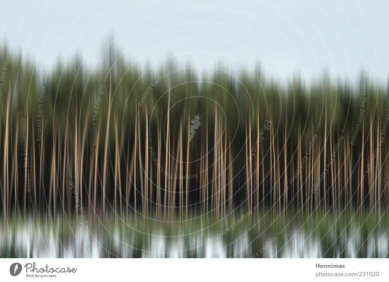Sky Nature Blue Green White Tree Winter Forest Landscape Wood Movement Line Field Background picture Climate Stripe