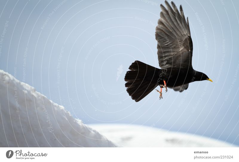 Sky Nature White Winter Black Animal Cold Dark Snow Mountain Movement Air Weather Bird Elegant Flying