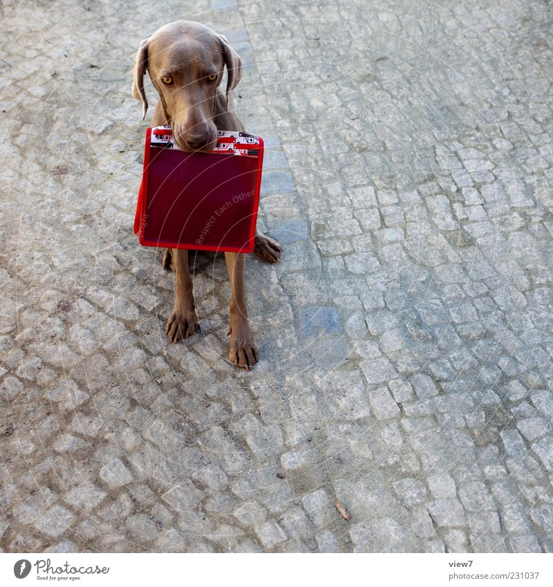 Old Red Dog Animal Colour Stone Moody Elegant Sit Beginning Fresh Authentic Uniqueness Retro Curiosity Sign