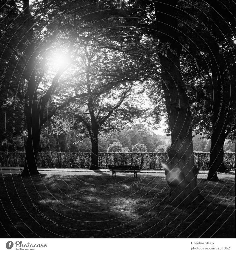 Nature Beautiful Tree Plant Sun Calm Autumn Environment Moody Park Gloomy Black & white photo Park bench