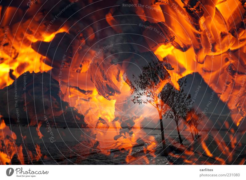 Making a fire for the winter Sun Winter Beautiful weather Warmth Tree Esthetic Dark Hot Red Loneliness Apocalyptic sentiment Energy Surrealism Environment
