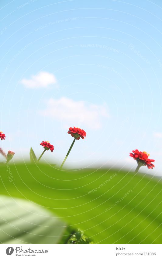 Sky Green Beautiful Red Plant Summer Flower Leaf Clouds Blossom Spring Growth Perspective Blossoming Beautiful weather Fragrance
