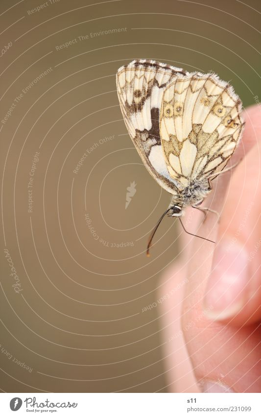 summer feeling Animal Butterfly Wing 1 Esthetic Elegant Free Near Curiosity Cute Beautiful Brown Joy Happy Contentment Spring fever Fly Feeler Summer Pattern