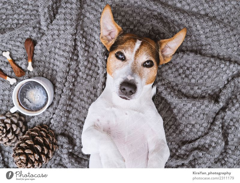 Adorable dog lying on blanket with cup of coffee and treats Vacation & Travel Dog Beautiful Joy Eating Lifestyle Funny Health care Style Fashion