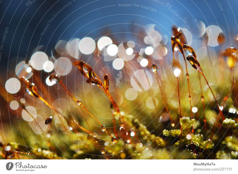 Moss Nature Plant Elements Earth Water Drops of water Sky Sun Sunlight Spring Climate Rain Leaf Exotic Garden Park Virgin forest Rock Alps Mountain Chaos Energy