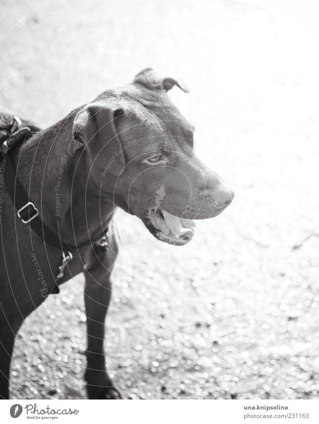 Dog Animal Pelt Pet Watchfulness Dog collar Wauwau