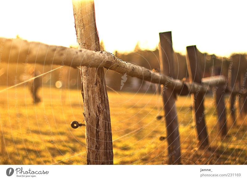 Nature Green Summer Yellow Meadow Landscape Warmth Field Gold Beautiful weather Pasture Fence Lens flare Fence post Electrified fence