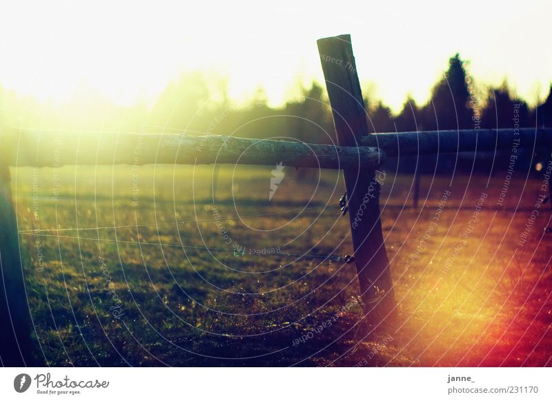 ah back then Nature Landscape Sun Sunlight Summer Weather Beautiful weather Field Warmth Yellow Gold Green White Fence Meadow Back-light Colour photo