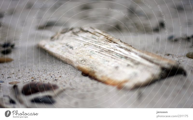 Nature Old Beach Environment Wood Sand Coast Dirty Lie Broken Derelict Wooden board Doomed Sharp-edged Find Close-up