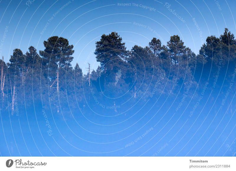Sky Blue Forest Natural Lake Joie de vivre (Vitality) Beautiful weather Large