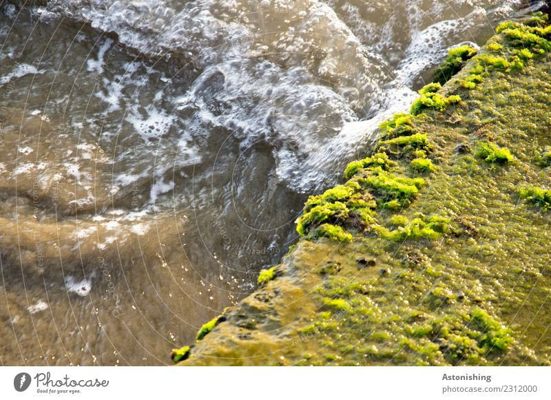 brown sea Environment Nature Water Plant Moss Albania Stone Wet Brown Yellow Green Dirty Ocean Colour photo Multicoloured Exterior shot Detail Deserted Day