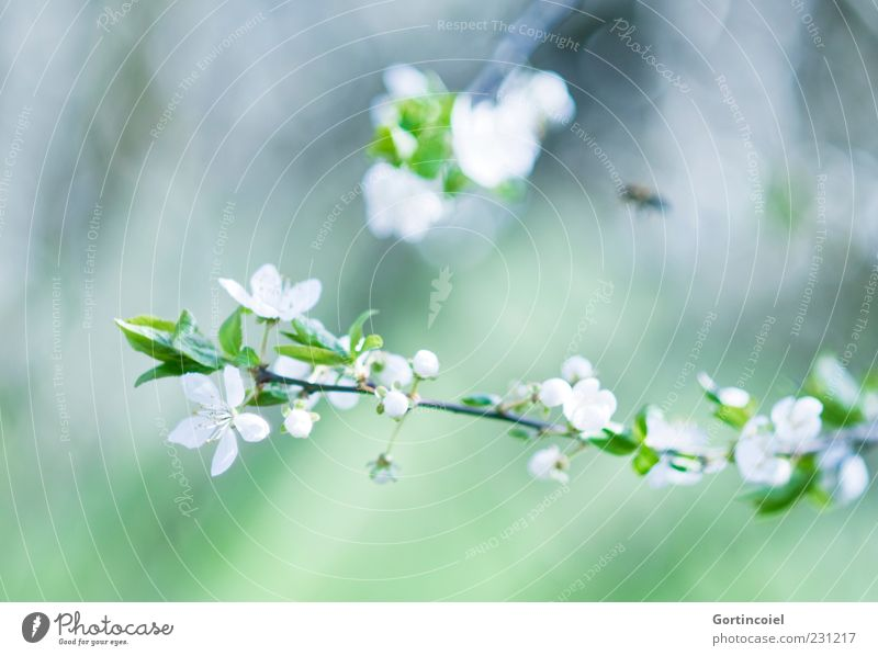 Nature Beautiful Green Leaf Blossom Spring Environment Blossoming Twig Bud Blossom leave Spring day