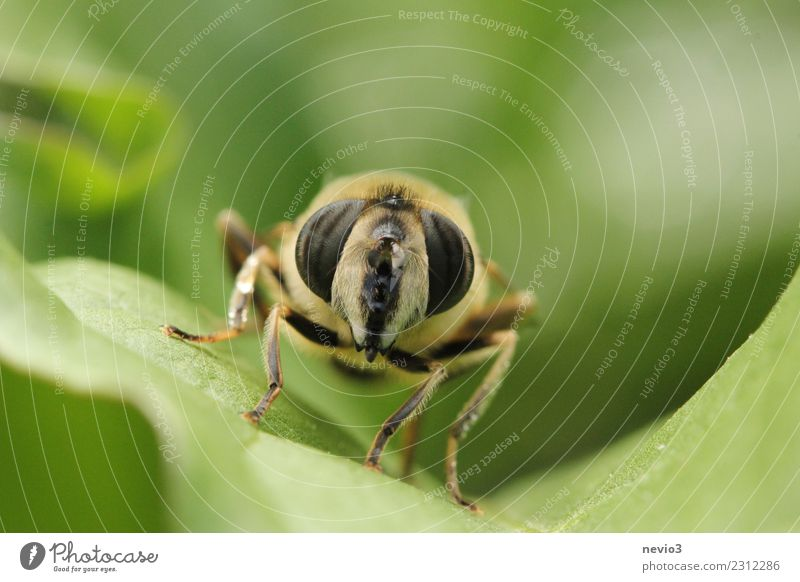 Macro photograph of an insect on a leaf Environment Nature Plant Grass Leaf Foliage plant Garden Meadow Animal Fly 1 Small Near Curiosity Green Love of animals