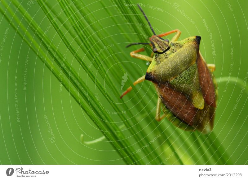 bug Environment Nature Plant Animal Spring Grass Leaf Foliage plant Agricultural crop Meadow Field Small Green Emotions Spring fever Diligent Disciplined Bug