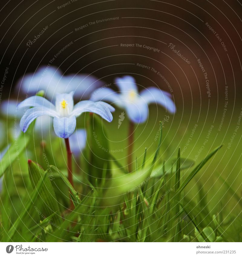 spring Nature Plant Spring Flower Grass Blossom Violet Delicate Beginning Colour photo Close-up Copy Space top Shallow depth of field Stalk
