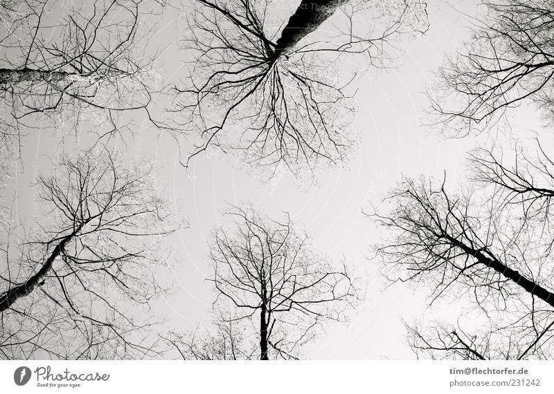 Sky Nature White Tree Plant Black Calm Forest Environment Dark Landscape Autumn Freedom Gray Air Contentment