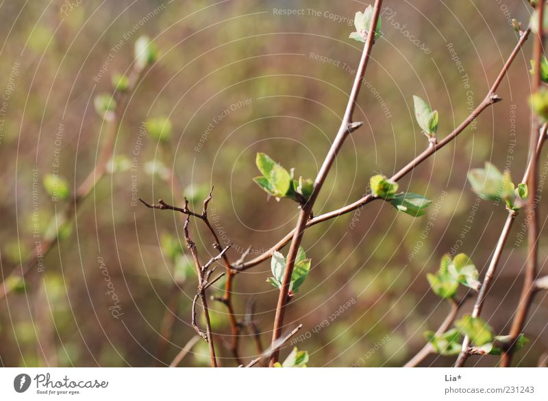 Nature Plant Green Leaf Environment Spring Brown Growth Power Bushes Beginning Joie de vivre (Vitality) Change Hope Seasons Twig