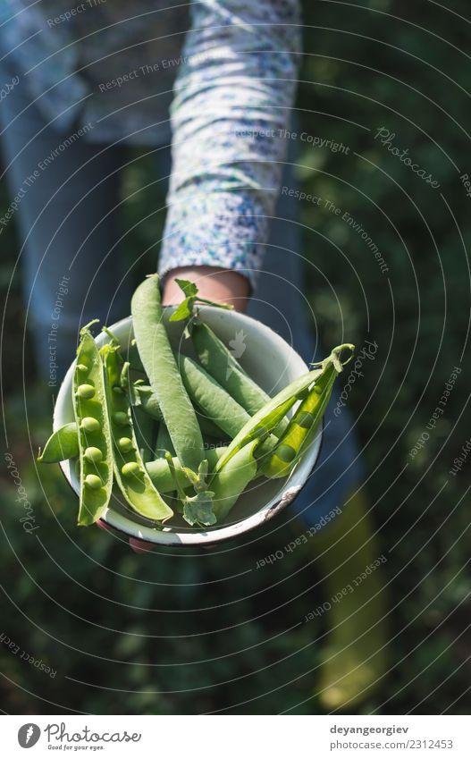 Harvest pea plants Vegetable Vegetarian diet Summer Sun Garden Gardening Woman Adults Hand Nature Plant Leaf Growth Fresh Green Peas food Organic agriculture