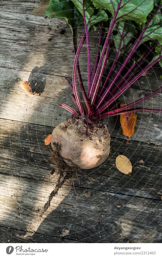 Picking red beets Nature Plant Green Red Leaf Natural Garden Earth Growth Fresh Vegetable Farm Harvest Vegetarian diet Vitamin Gardening