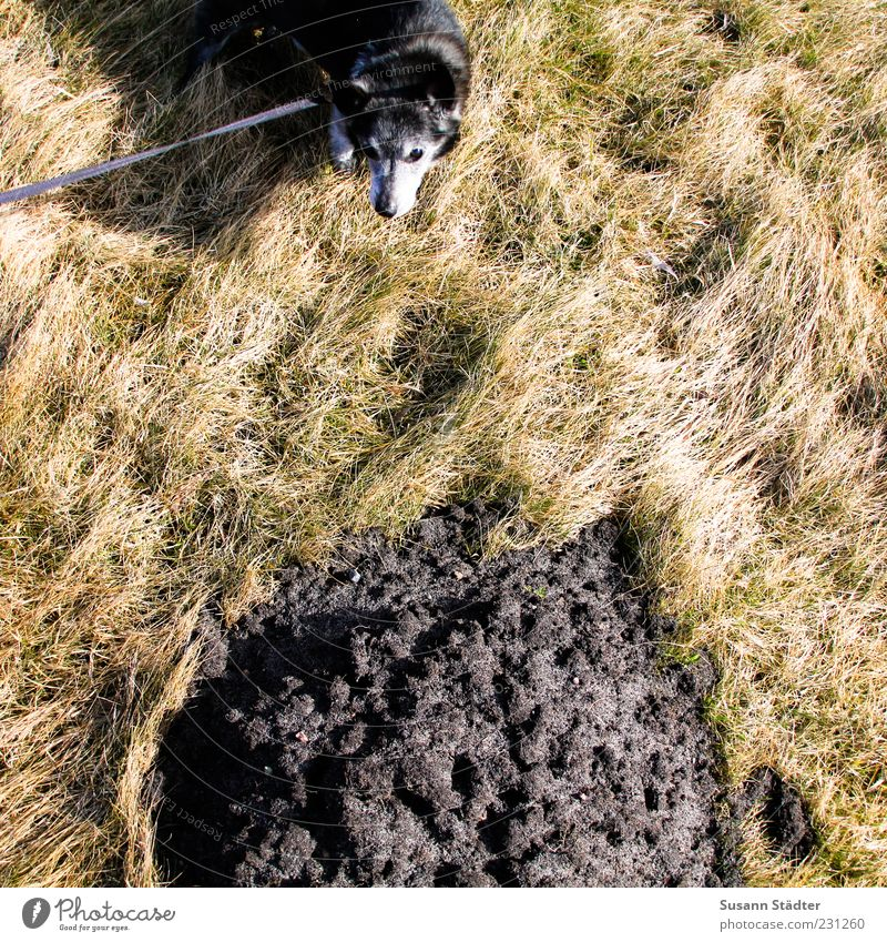 Nature Plant Dog Environment Grass Earth Wait Exceptional Bushes Elements Hill Feces Pet Drought Heap Human being