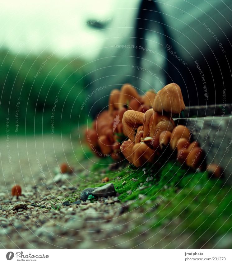 Nature Green Autumn Gray Lanes & trails Car Brown Environment Mushroom Poison Motor vehicle Mushroom cap Blur Sunlight