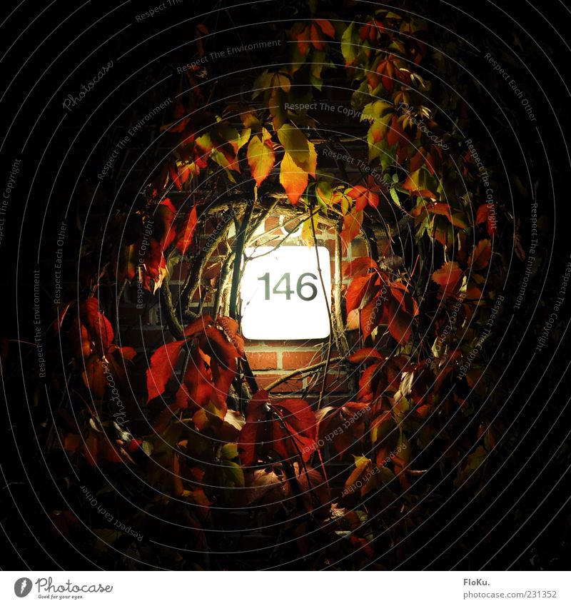 146 Plant Bushes Leaf Wall (barrier) Wall (building) Black White Lamp Light Ivy Tendril Digits and numbers House number Night Lighting Seeming Bright