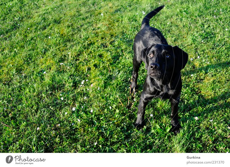 Dog over the grass Garden Animal Pet 1 Looking Black Green Wait Colour photo Exterior shot Deserted Morning Day Evening Contrast Central perspective Long shot