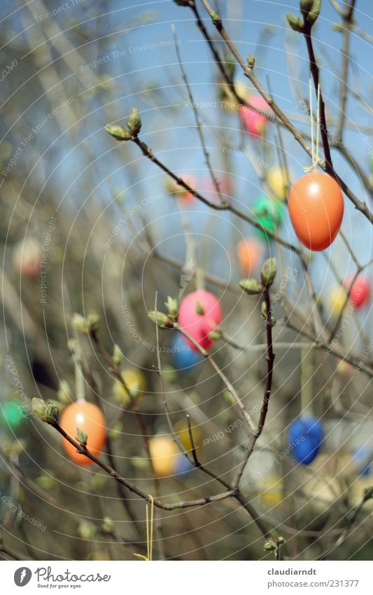 iShrub Garden Decoration Easter Nature Plant Bushes Wood Plastic Hang Multicoloured Spring Easter egg Egg Twigs and branches Shoot Leaf bud Sky Colour photo