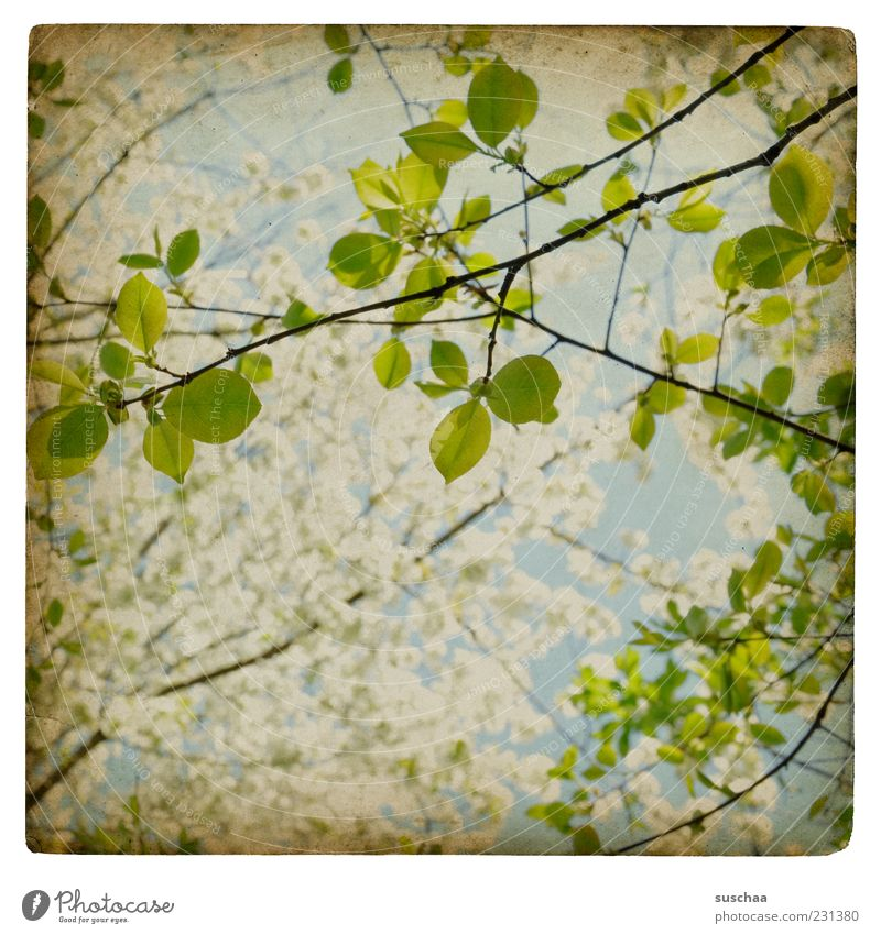 Sky Nature Green Leaf Environment Blossom Spring Air Fresh Growth New Hope Branch Beautiful weather Anticipation Twigs and branches