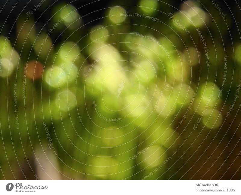 Green Plant Life Background picture Esthetic Exceptional Uniqueness Bizarre Moss Exotic Inspiration Copy Space Hazy Spring fever Abstract Blur