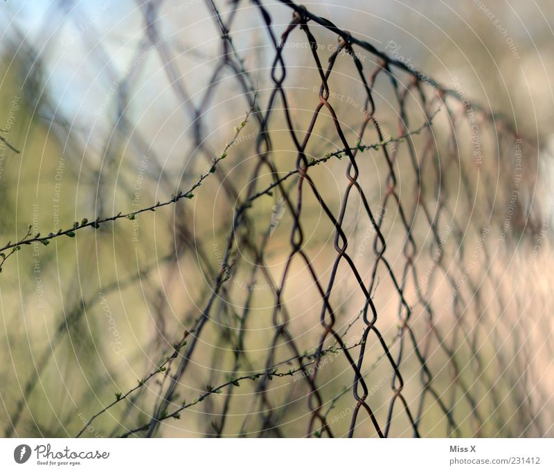perimeter fence Plant Bushes Gloomy Fence Wire Wire netting fence Rust Colour photo Exterior shot Close-up Pattern Deserted Shallow depth of field Safety Blur