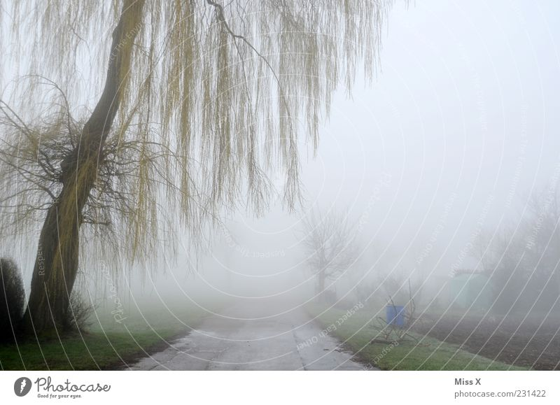 away into nowhere Environment Nature Spring Winter Climate Weather Bad weather Fog Ice Frost Tree Bushes Deserted Lanes & trails Cold Spooky Willow tree