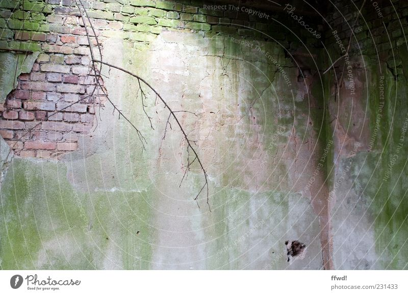 Old Wall (building) Building Wall (barrier) Moody Lighting Dirty Change Corner Transience Branch Derelict Brick Decline Ruin Twig