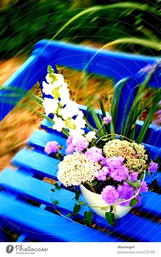 Flower Blue Autumn Garden Moody Bench Bouquet Vase Flower arrangement Garden bench