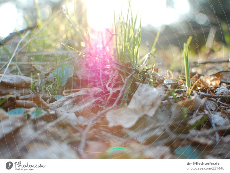 breakthrough Environment Nature Plant Earth Air Sunrise Sunset Sunlight Spring Summer Beautiful weather Grass Leaf Wood Bright Near Brown Green Pink Moody
