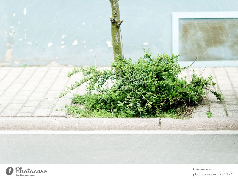 bush Deserted House (Residential Structure) Wall (barrier) Wall (building) Facade Window Street Green Sidewalk Footpath Bushes Tree trunk Colour photo