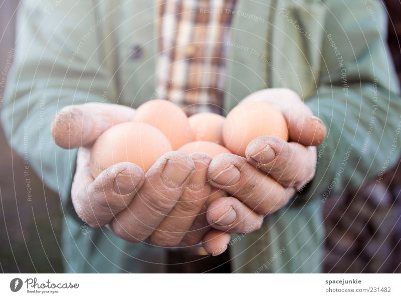 Easter eggs Masculine Man Adults Male senior 60 years and older Senior citizen Work and employment To hold on Brown Yellow Patient Calm Appetite Egg Stop Hand