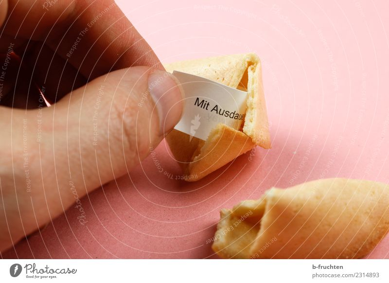 fortune cookie Candy Man Adults Hand Fingers Discover To hold on Looking Pink Happy Hope Belief Joy Mysterious Fortune cookie Undo Figure of speech Wisdom