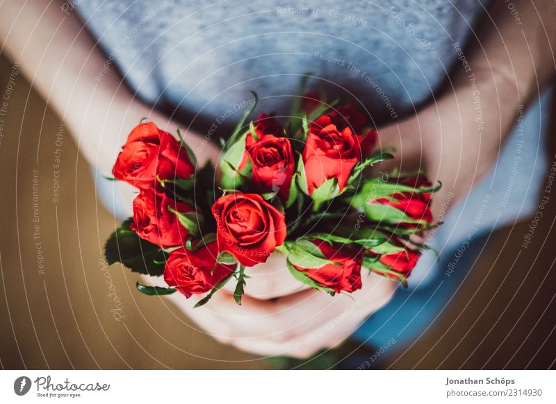 red roses for Valentine's Day Joy Woman Adults Friendship Hand Flower Rose To hold on Love Red Emotions Spring fever Date Gift Background picture Lovers