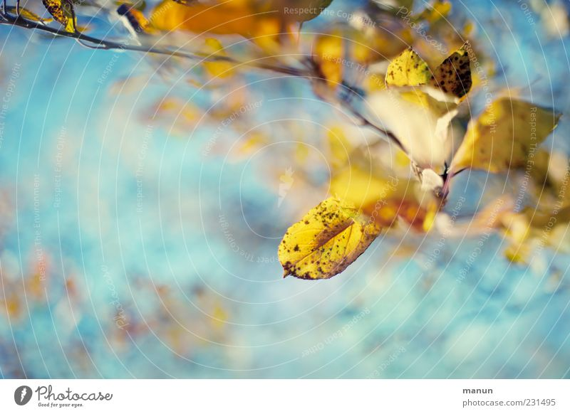 Nature Beautiful Leaf Yellow Autumn Bright Exceptional Change Kitsch Beautiful weather Turquoise Autumn leaves Autumnal Autumnal colours Twigs and branches Seasons