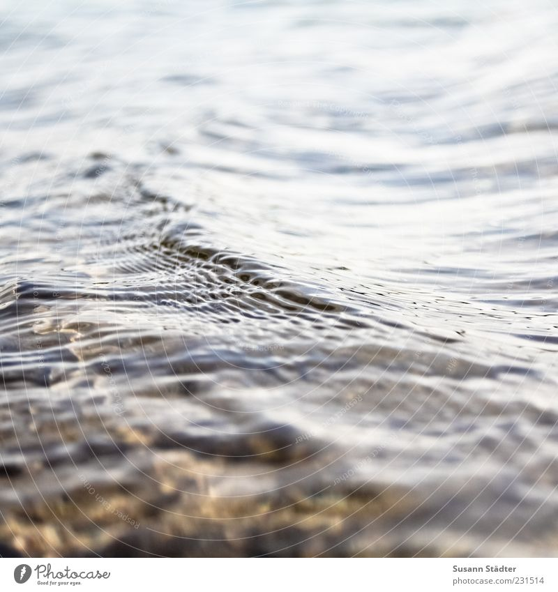 shallow Waves Lakeside River bank Brook Wet Stone Shallow Flow Close-up Day Contrast Deserted Blur Copy Space top