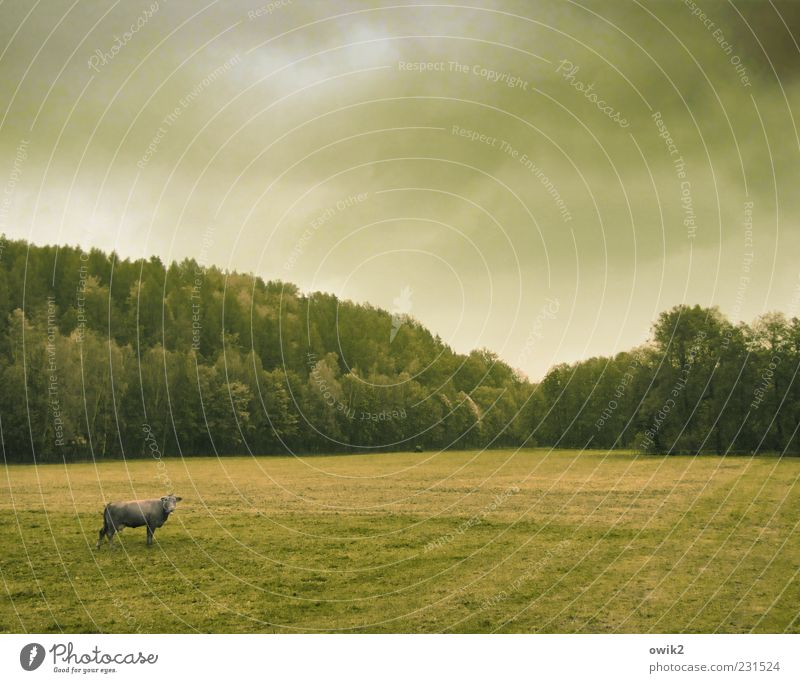 Sky Nature Green Tree Plant Clouds Animal Calm Far-off places Forest Autumn Meadow Environment Landscape Grass Weather
