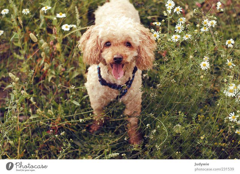 Nature Green Dog Summer Flower Animal Environment Grass Blossom Spring Brown Happiness Cute Pelt Brash Pet