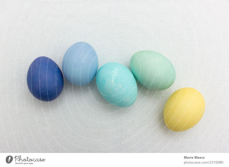 Easter eggs group in pastel colours Food Egg Eating Fresh Blue Multicoloured Yellow Green Together Colour Dyeing Pastel tone Play of colours Colour photo