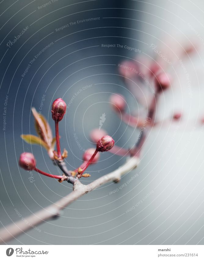 Nature Red Plant Summer Leaf Spring Branch Blossoming Bud