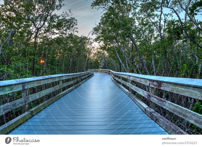 Boardwalk through the swamp, leading to Clam Pass at sunset Vacation & Travel Trip Sky Clouds Sunrise Sunset Tree Coast River bank Lanes & trails Blue Green