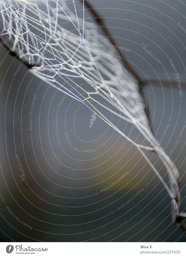 net Nature Spider Wet Network Spider's web Dew Colour photo Subdued colour Exterior shot Close-up Pattern Deserted Neutral Background Morning