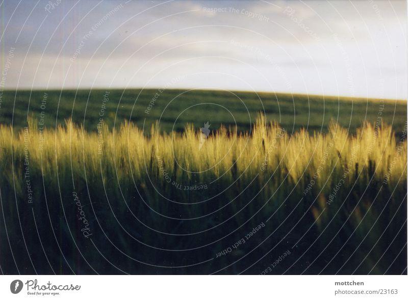 Field Grain Hill Grain Dusk